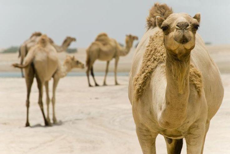 Ras Al Khaimah: Tapping into the Arabian spirit
