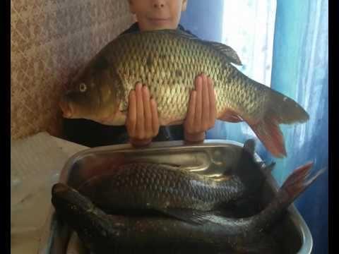 Рыба в духовке. Запечённый карп, огромный карась и щука. Baked carp, a h...