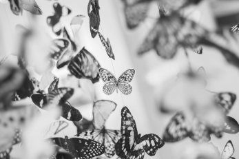 Ride your butterflies through life: a great way to manage your feelings!