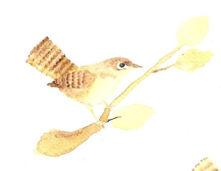 acuarela . aves de chile