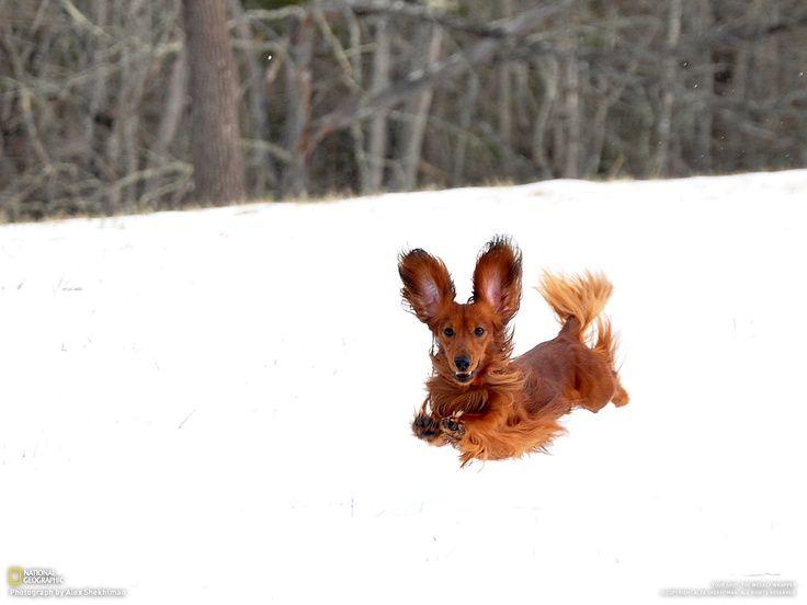 the ears!!