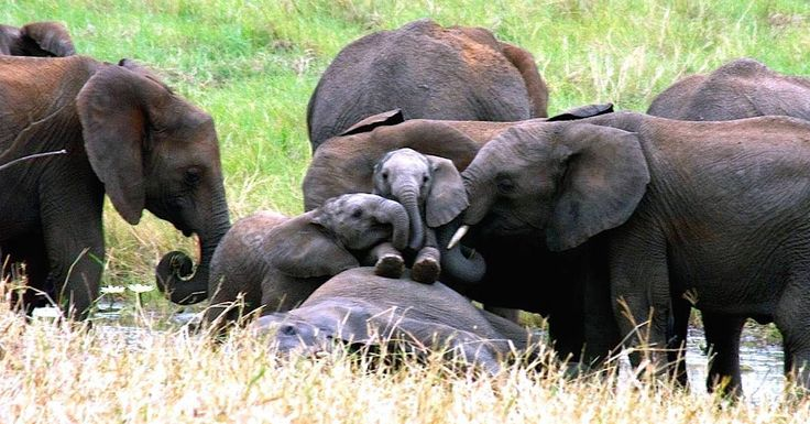 China's plan to end its ivory trade — the world's largest — in 2017 is a huge step forward to save elephants.