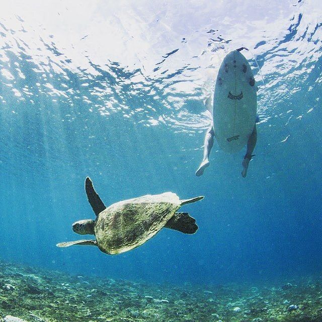 Surf and turtle. (Regram from @explorepulaubanyak)  Location : Pulau Banyak, Aceh Singkil  #WisataAceh  #AyoKeAceh  #AyoKePulauBanyak  More information follow @wisataaceh and visit website www.wisataceh.com