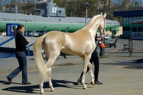 These 10 Rare And Beautiful Horses Are Like Nothing You've EVER Seen! | PetFlow Blog - The most interesting news for pet parents around the ...