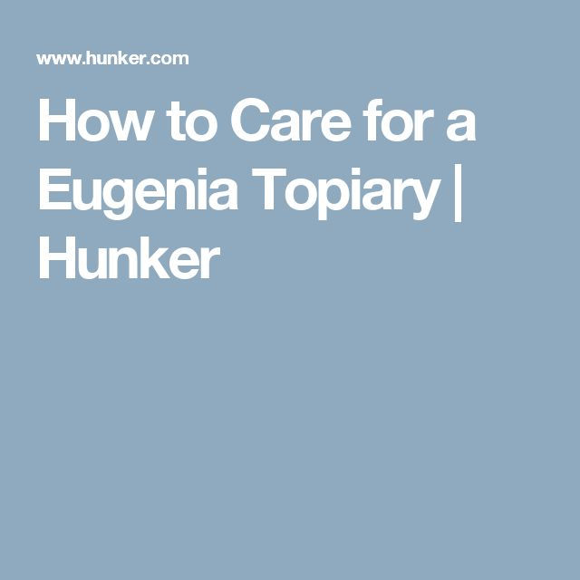 How to Care for a Eugenia Topiary | Hunker