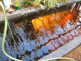 Organic Aquaponics steps