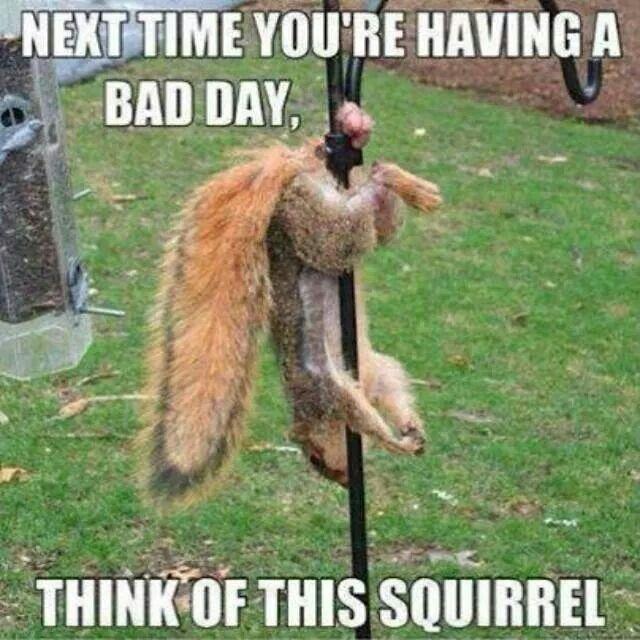 Squrrel having Bad day nuts stuck on humming bird feeder pole lol