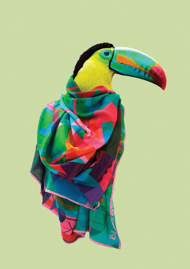 blazon scarf collection.