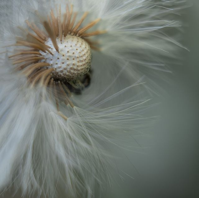 #Blume #Natur #Pflanze #fujifilm #fotokunstkultur #foto