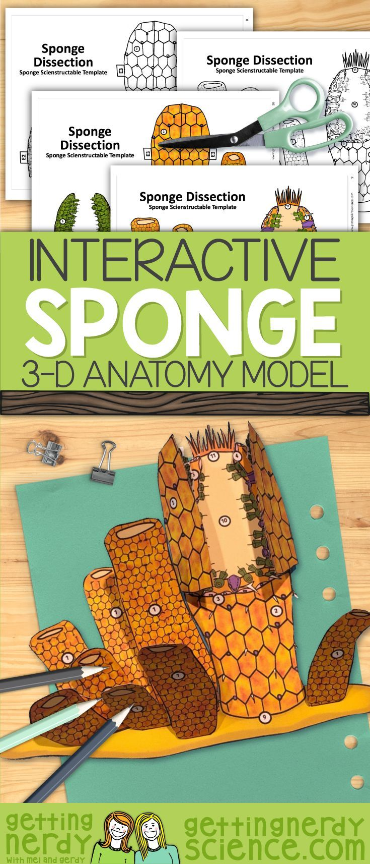 This 3 D Porifera Sponge Dissection Model Can Be Used As A Dissection Free Sponge Exploration A Biology Lessons Science Education Interactive Science Notebook
