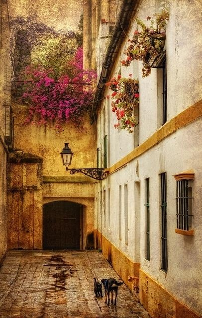 """Side Street ~ Seville ~ Spain; we came across a flamenco bar nearby and sang with """"mi amigos"""" until early in the morning"""