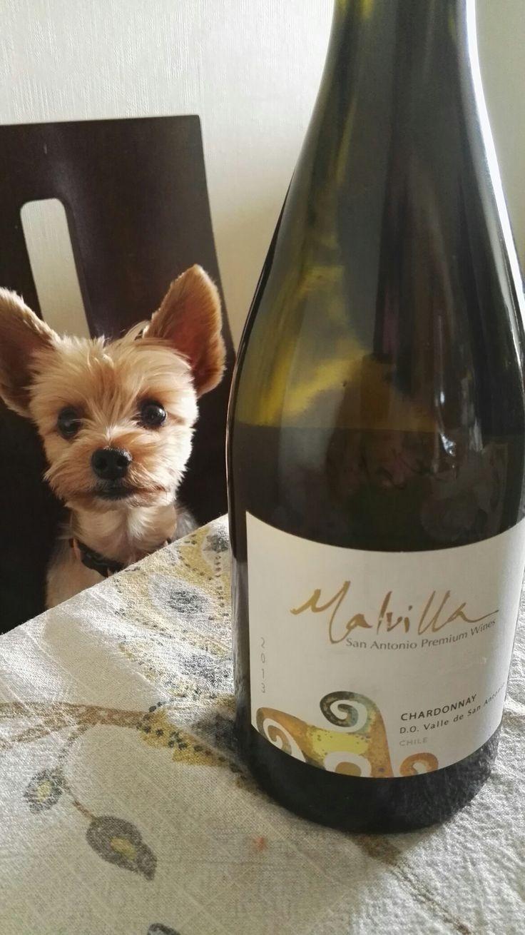 Malvilla San Antonio Premium Wines 2013 - Chardonnay
