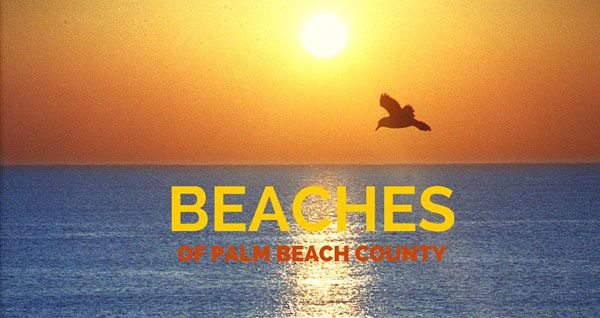 From Tequesta to Boca Raton, we list the main attractions, facts of each of our local beaches.