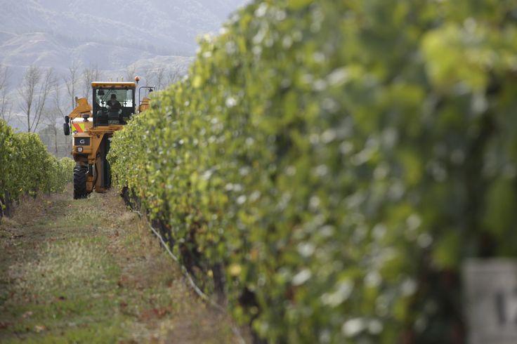 #mountriley #nzwine #vineyard