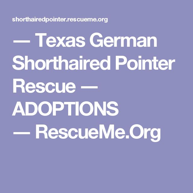 ― Texas German Shorthaired Pointer Rescue ― ADOPTIONS ―RescueMe.Org