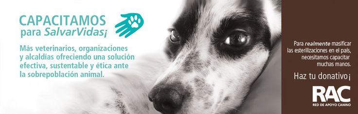 Red de Apoyo Canino - Asociación civil Red de Apoyo Canino. Organización comprometida en contra del maltrato animal. Caracas Venezuela