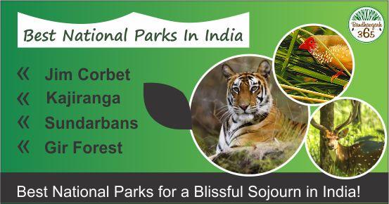 """Best National Parks In India """"#JimCorbet, #Kajiranga, #Sundarbans & #GirForest"""" Best National Parks For A Blissful Sojourn in India!!!"""