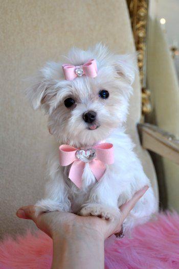 Cute bows and cuter dog.