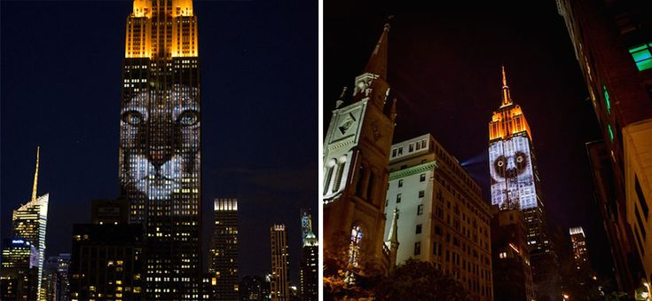"""Cecil The Lion And 160 Endangered Animals Projected On Empire State Building. the Empire State Building's facade was lit by up to 40 projectors shining striking images of 160 different endangered species. """"Projecting Change"""" was organized by the Discovery Channel to promote its new documentary Racing Extinction, which airs this December."""