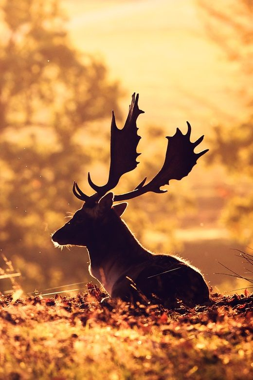 Warm by Mark Bridger