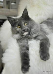 Pan Dora .. a little werewolf like my Lupin! He's gorgeous!!