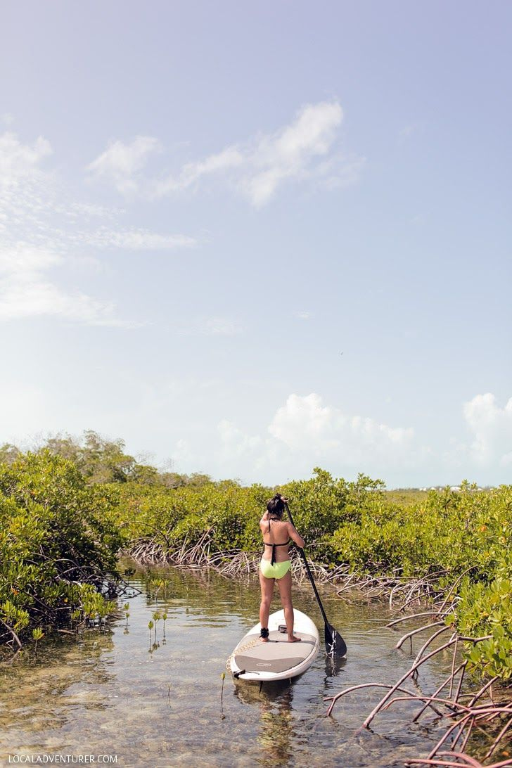 The Mangroves, Turks and Caicos, home to baby sharks, turtles, and other sea life // localadventurer.com