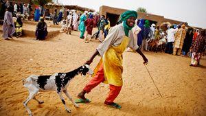 Malgré la victoire d'Ibrahim Boubacar Keita lors de l'élection présidentielle qui s'est tenue dans un climat paisible, des violences sporadiques continuent de secouer le nord du pays, où, depuis plusieurs mois déjà, les éleveurs ne peuvent plus emprunter les routes traditionnelles pour chercher des pâturages par crainte d'attaques des bandits et des rebelles.
