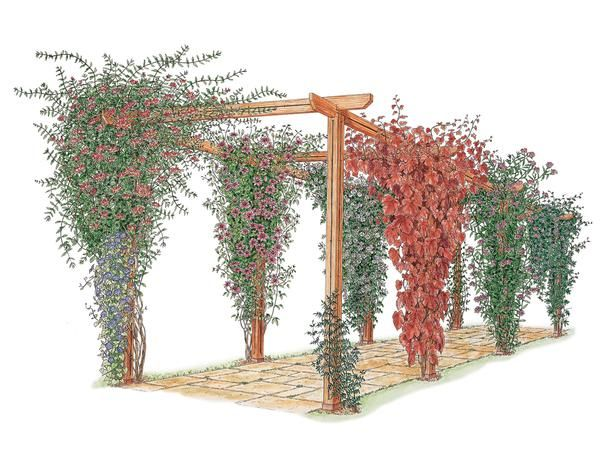 How to Choose and Maintain Climbing Plants : Home Improvement : DIY Network