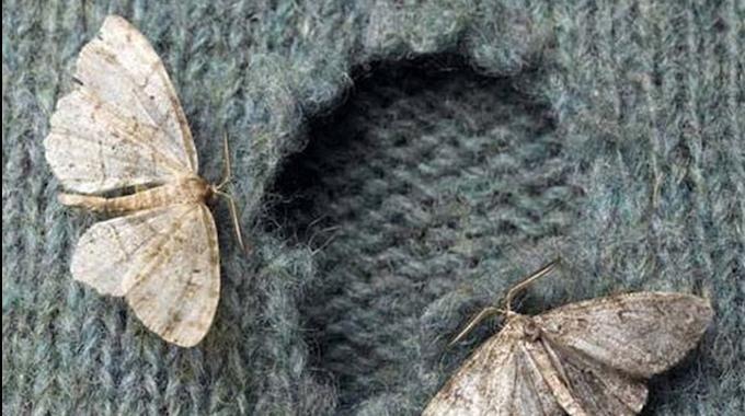Vous avez découvert des trous dans vos vêtements ? C'est sûrement qu'il y a des mites dans le coin ! Les mites ont tendance à grignoter les fibres textiles comme la laine des pulls. Et comme on...