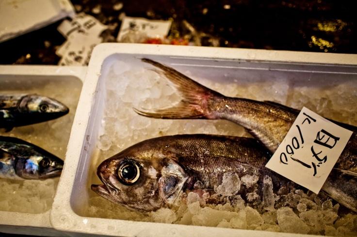 tsukiji fishmarket in Tokyo