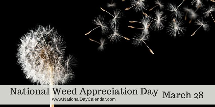 NATIONAL WEED APPRECIATION DAY – MARCH 28 NATIONAL WEED APPRECIATION DAY Did you know that some weeds are actually beneficial to us and our ecosystem?  National Weed Appreciation Day is celebrated …