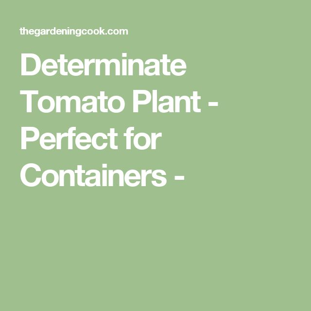 Determinate Tomato Plant - Perfect for Containers -