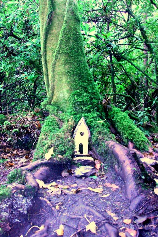 Searching for the fairy homes on the Irish Fairy Trails is a great family fun adventure. On a rainy day and in the shelter of the woods makes this a memorable day out for all in Parknasilla Resort