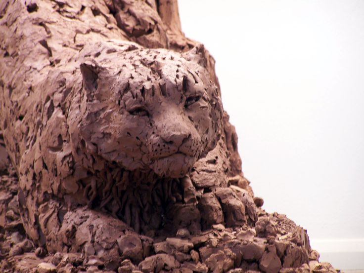 Detail of life size clay male snow leopard by Katherine M Waters