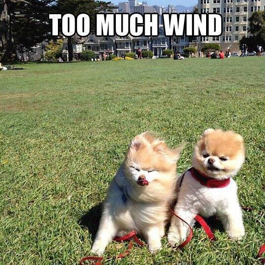 12 Best Images About Windy Day Hang On! On Pinterest