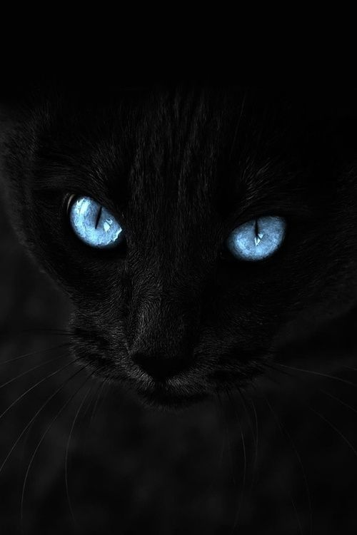 "black cat with blue eyes (just like taking a black crayon and drawing ""a black bear in black forest at midnight"" . . . Calvin and Hobbs)"