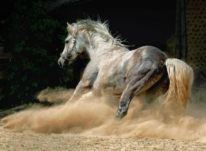 il cavallo di Artemide, Dea della caccia e della Luna