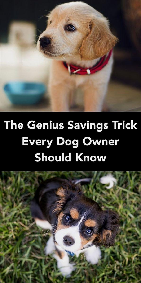 Dog Training Gone Wrong Dog Training Tallahassee Training Your
