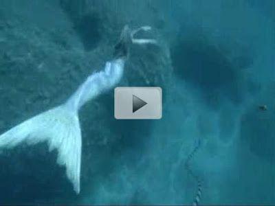 The gallery for --> Real Mermaid Sightings 2014