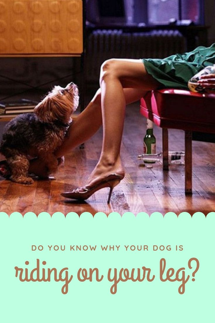 Do You Know Why Your Dog Is Riding On Your Leg Your Dog Dogs