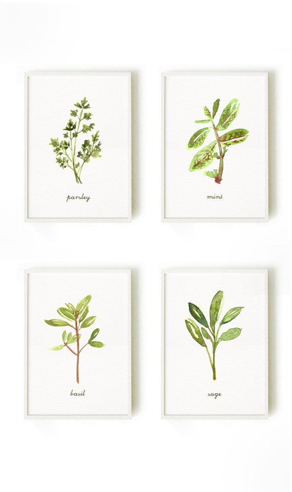 Kitchen art, Herb watercolor painting, Set of 8 herb, Kitchen print, Botanical print set, Living room wall art, Spring decor, Green leaves  This set of 8 herb prints will make a gorgeous collection for your wall. They are an art print of my original watercolor paintings. This listing includes 8 kinds of herb: 1. Basil 2. Dill 3. Mint 4. Parsley 5. Rosemary 6. Sage 7. Tarragon 8. Thyme  • 4x6 / 5x7 / 8x10 • Printed on heavy weight, acid free fine art card with texture. It adds a tact...