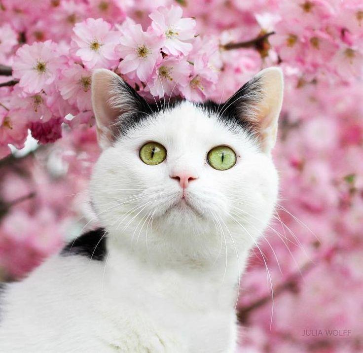 Pink flowers                                                                                                                                                                                 Mais
