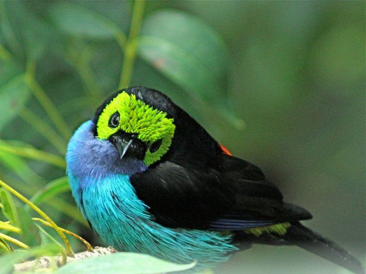 rainforest birds - Google Search