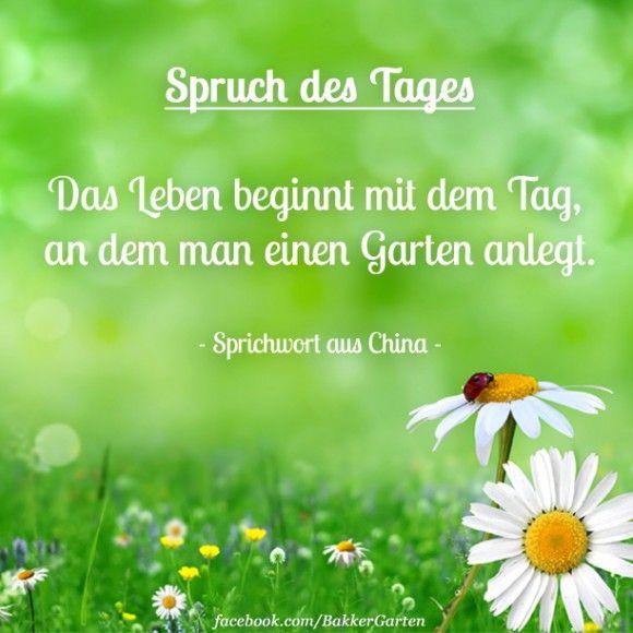 Blumen Spruch Des Tages Blumen Spruch Spruche Gartengedichte