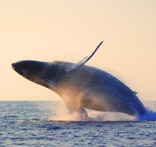 A whale photo in Tenerife ... one of the best place to observe whales and Dolphins