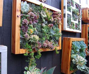 Hanging garden  from homedecornews...I think this is what Cindy was telling me that she was doing with her chickens...very cool