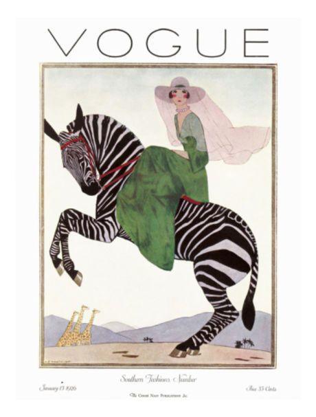 Zebra Safari - Matchbook Magazine