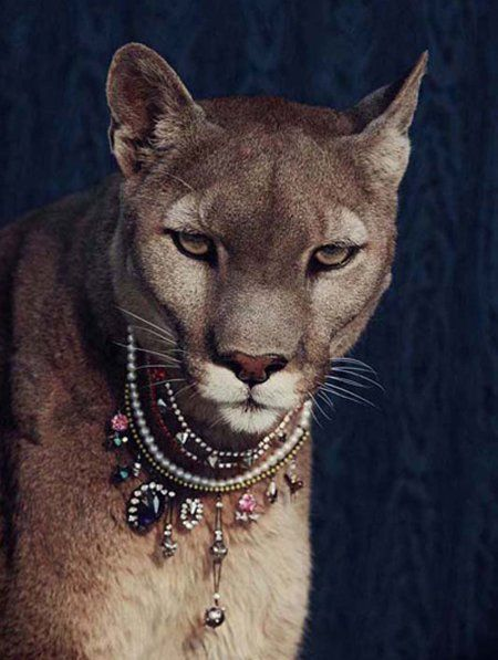 Yep...I'll have a pet mountain lion adorned with jewels please!