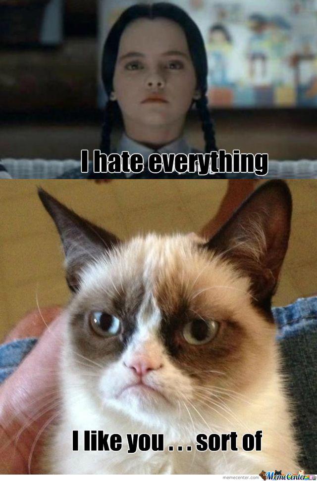 Mad cat & Wednesday