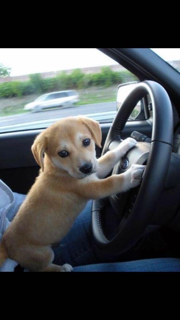 Driving is ruff.. http://ift.tt/2s35aBf